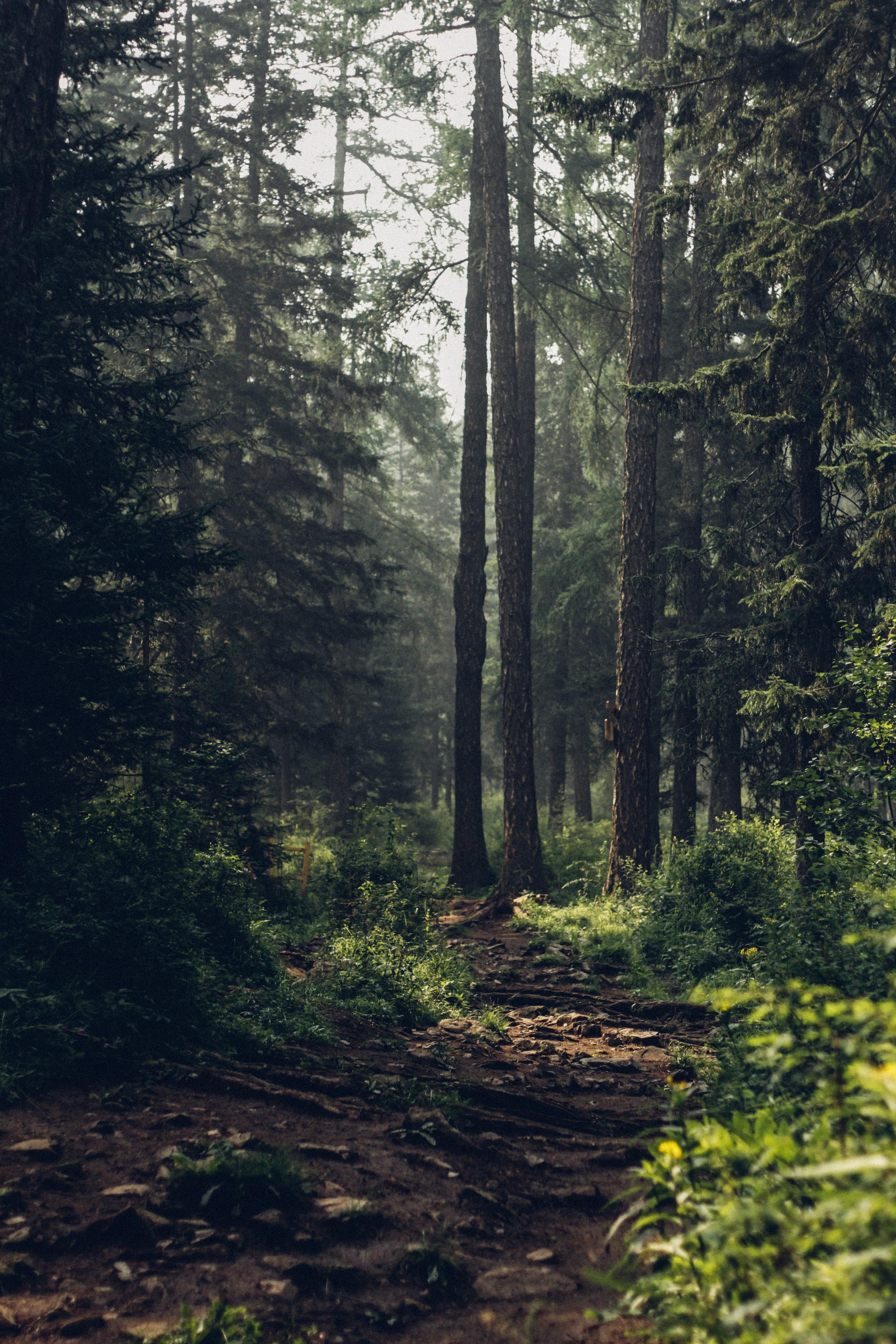 De natuur als jouw portal